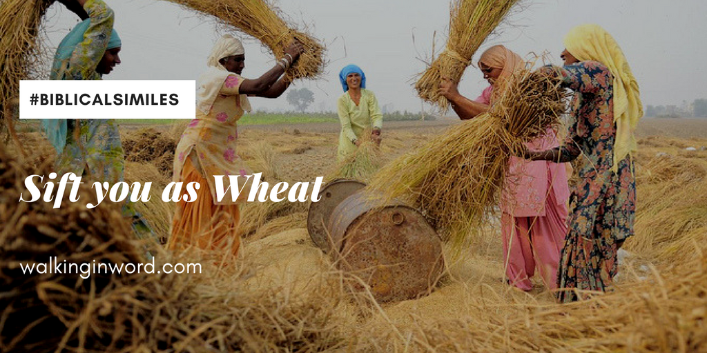 Day 29 ~ Sift you as Wheat